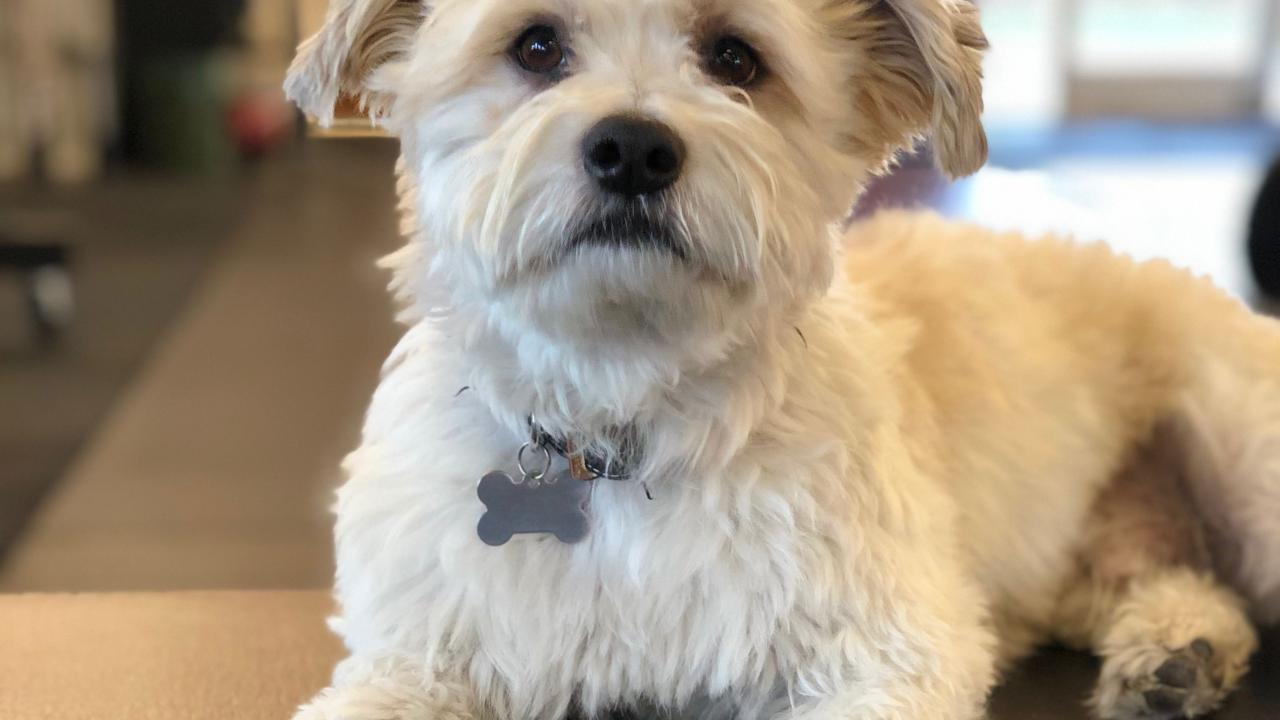 Charlie was saved by specialists at the UC Davis veterinary hospital after being attacked by a larger dog.