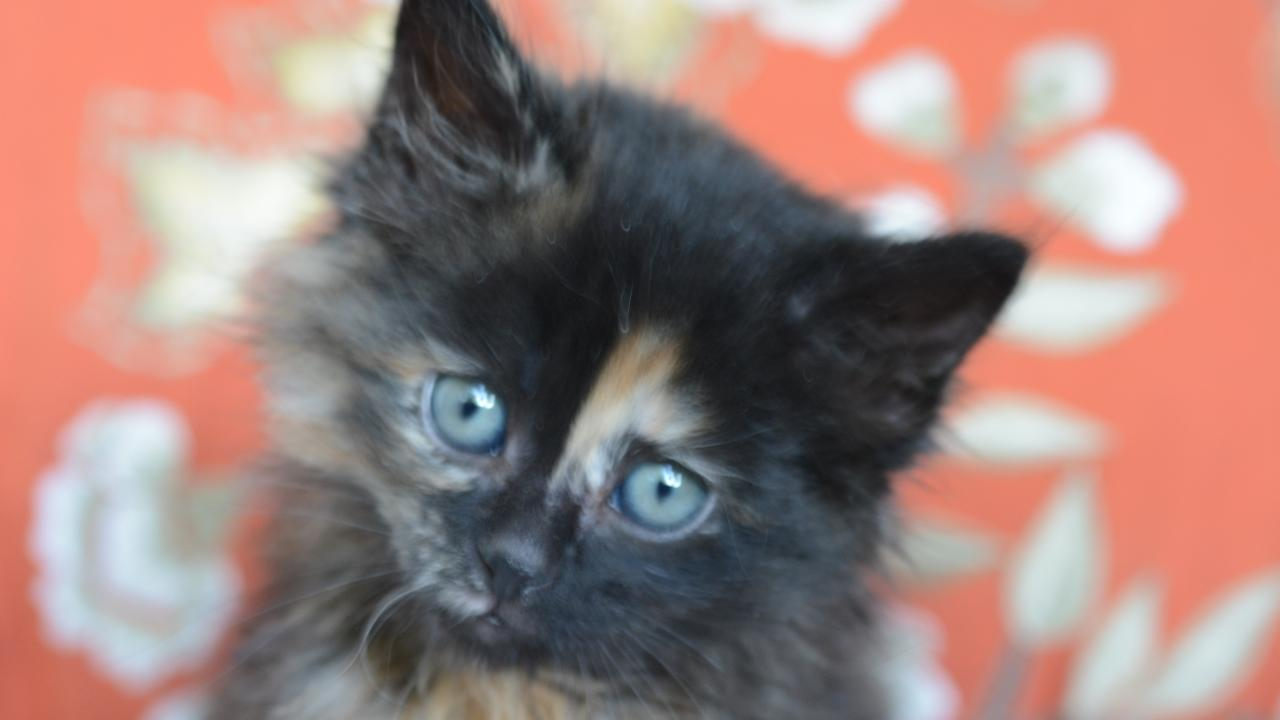 Kittens are the youngest winners in Million Cat Challenge.