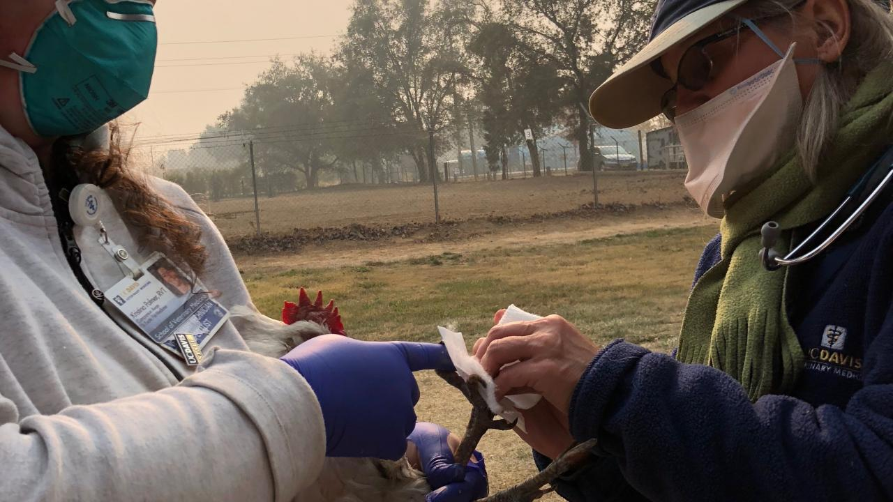 Veterinary technician Kristina Palmer and Dr. Hawkins caring for the birds at the Fairgrounds with the thick smoke in the background.
