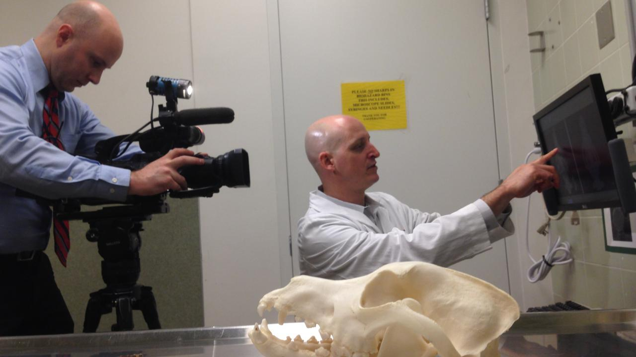 UC Davis veterinarian Dr. Boaz Arzi with 3D printed skull