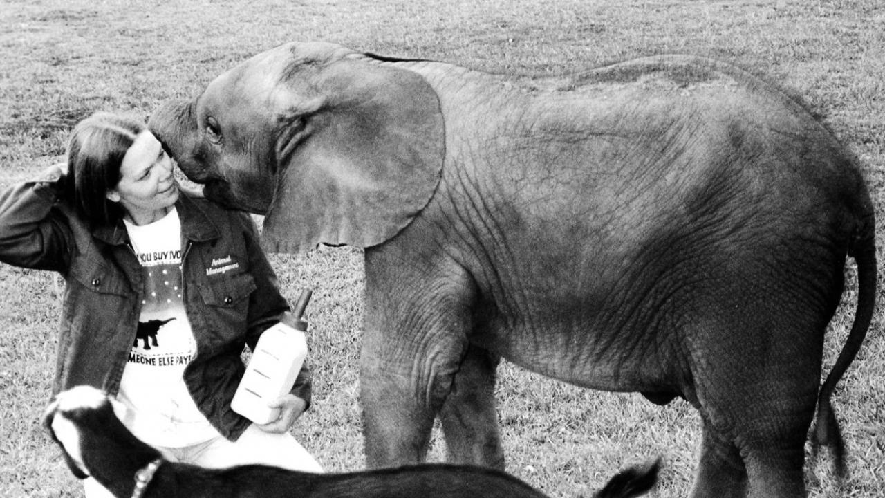 Dr. Jackie Gai and baby elephant