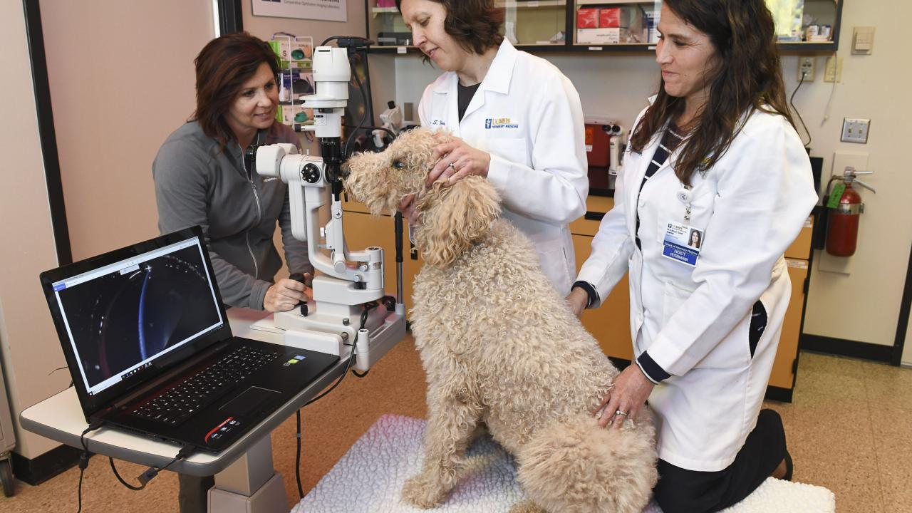 UC Davis technician and ophthalmologists examine a dog