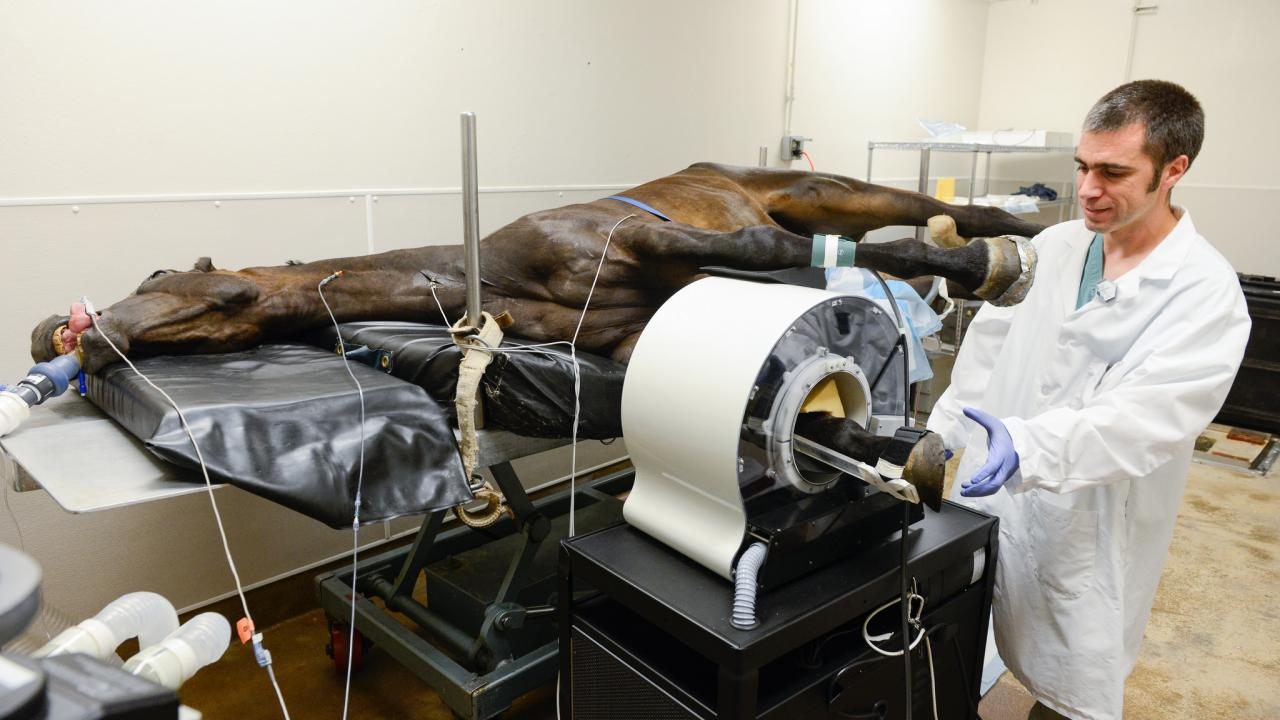 Dr. Mathieu Spriet performs a PET scan on a horse at the UC Davis veterinary hospital.