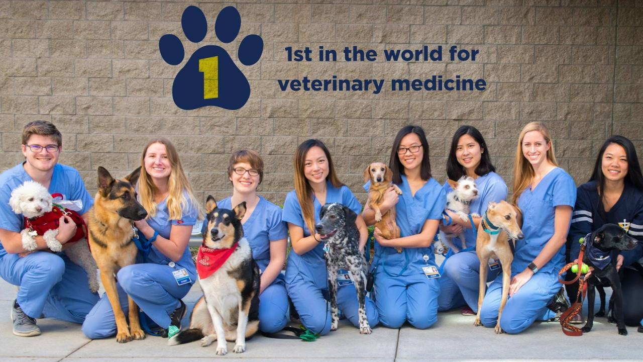 UC Davis is ranked #1 in the QS World University Rankings in veterinary science.