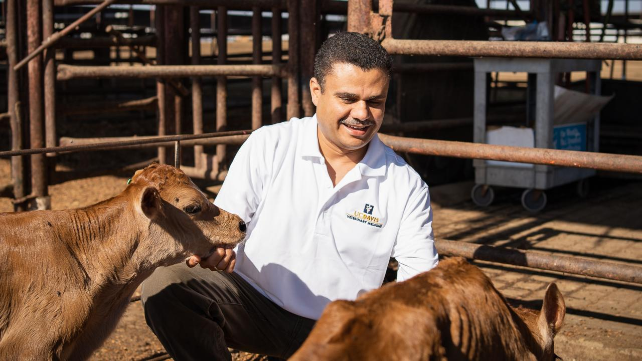 Dr. Sharif Aly with dairy calves.