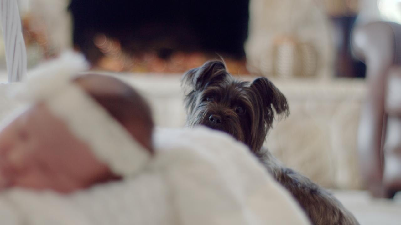 Here's how to make sure your pooch is ready for the new baby