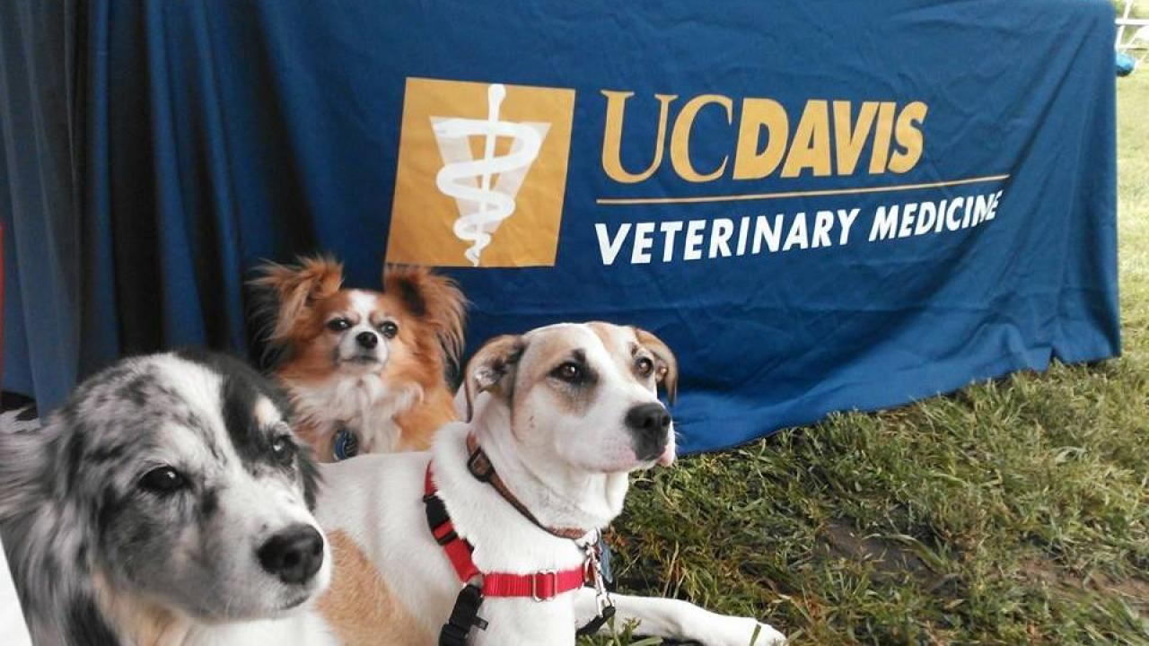 dogs at a UC Davis veterinary event