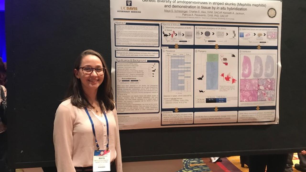 Veterinary Conferences Calendar 2022.Dvm Student Maya Schlesinger Wins Poster Award At Pathology Conference School Of Veterinary Medicine