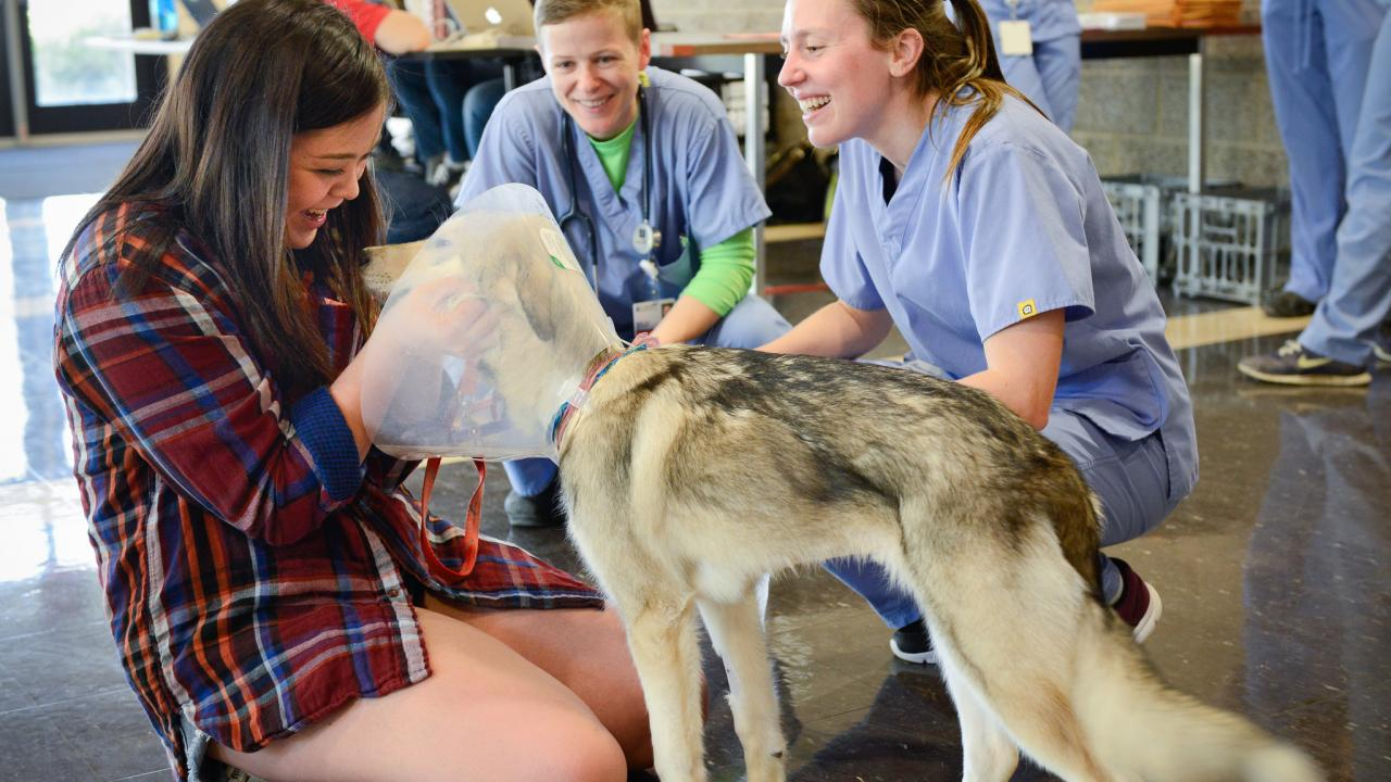 volunteer and students care for dog patient