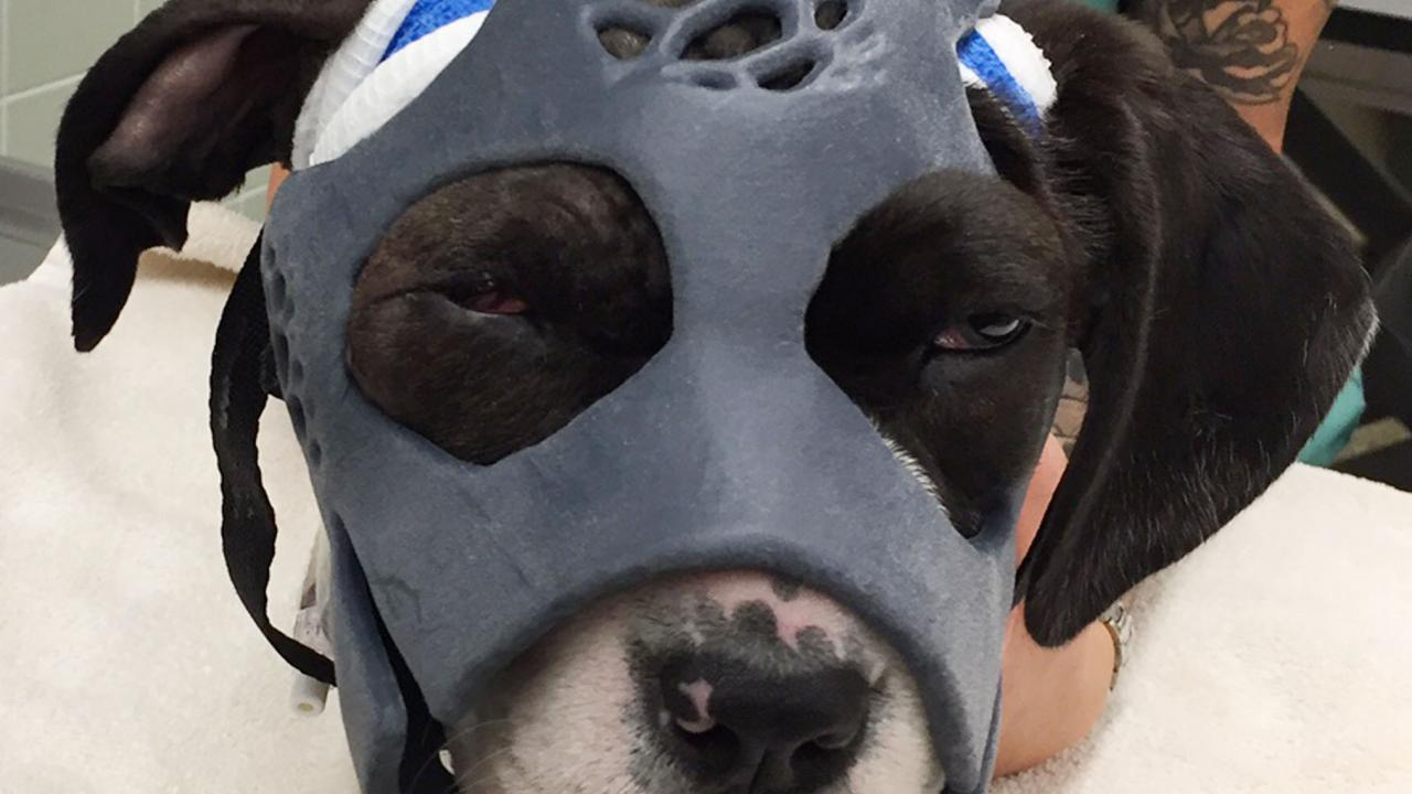 mask on dog