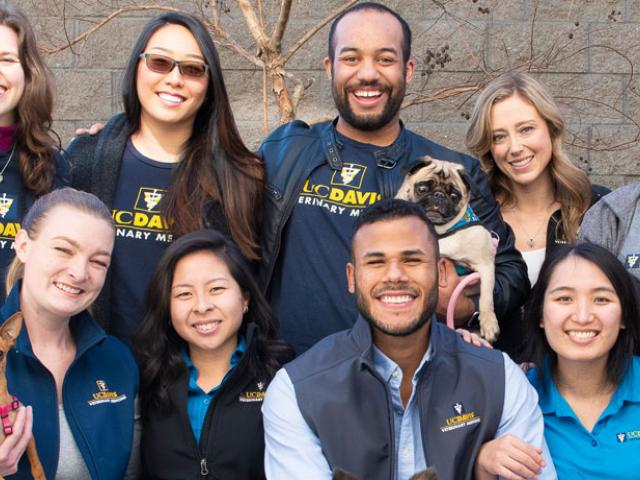 Group of veterinary students with dogs