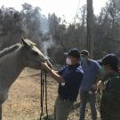 Dr. John Madigan and a horse as fires burn in Napa and Sonoma counties in October 2017