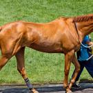 photo of racehorse