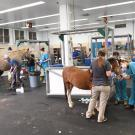 horses being treated for burns at UC Davis veterinary hospital