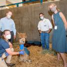 UC Davis veterinarians visit burned alpacas